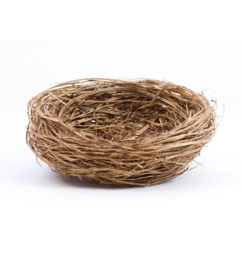 Summer Empty Nest